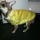 яркое пальтишко искусственный мех для мелких пород собак