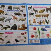 """Плакат Английский в картинках. """"Животные.Насекомые.Цветы"""", б/у"""