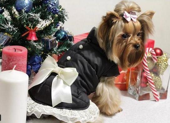 Куртка для собак с бусинками,рюшей и бантом dogs bomba k-24 фото №1