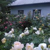 дом с.Пустовиты Мироновский р-н Киевская обл. 100 км от Киева