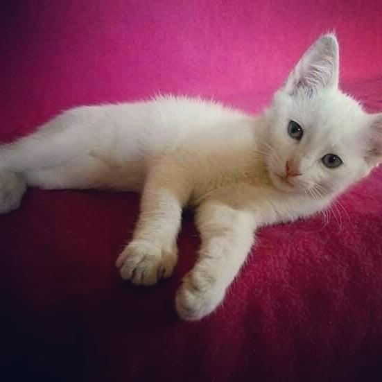 Кошка 7 месяцев фото №1
