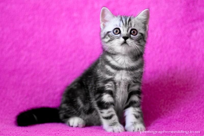 Фотограф для ваших домашних животных. фото №1