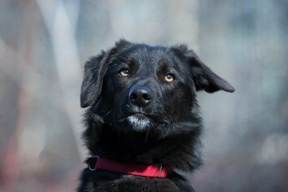 Отдам в хорошие руки идеальную собаку онору фото №1