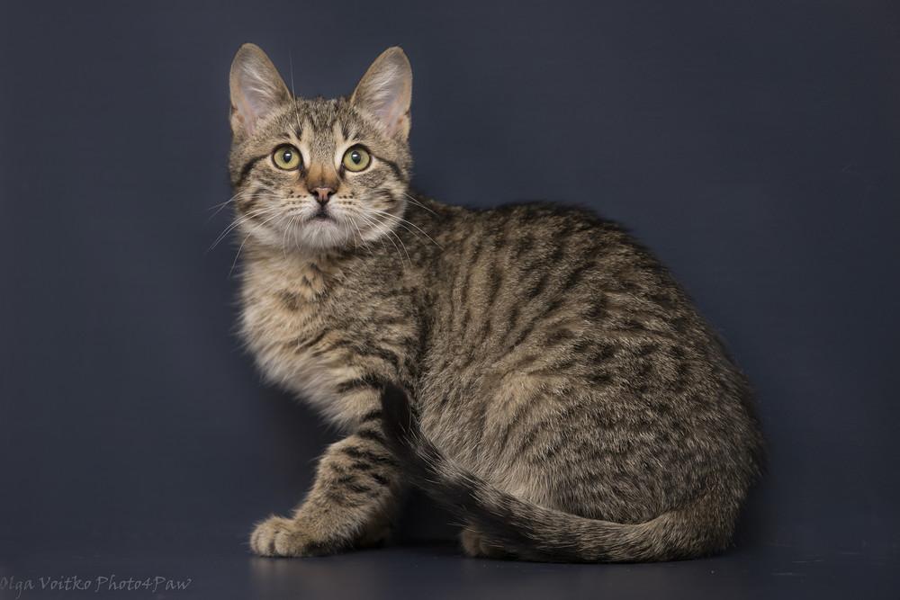 Отдам в хорошие руки котенка мальчика литона фото №1