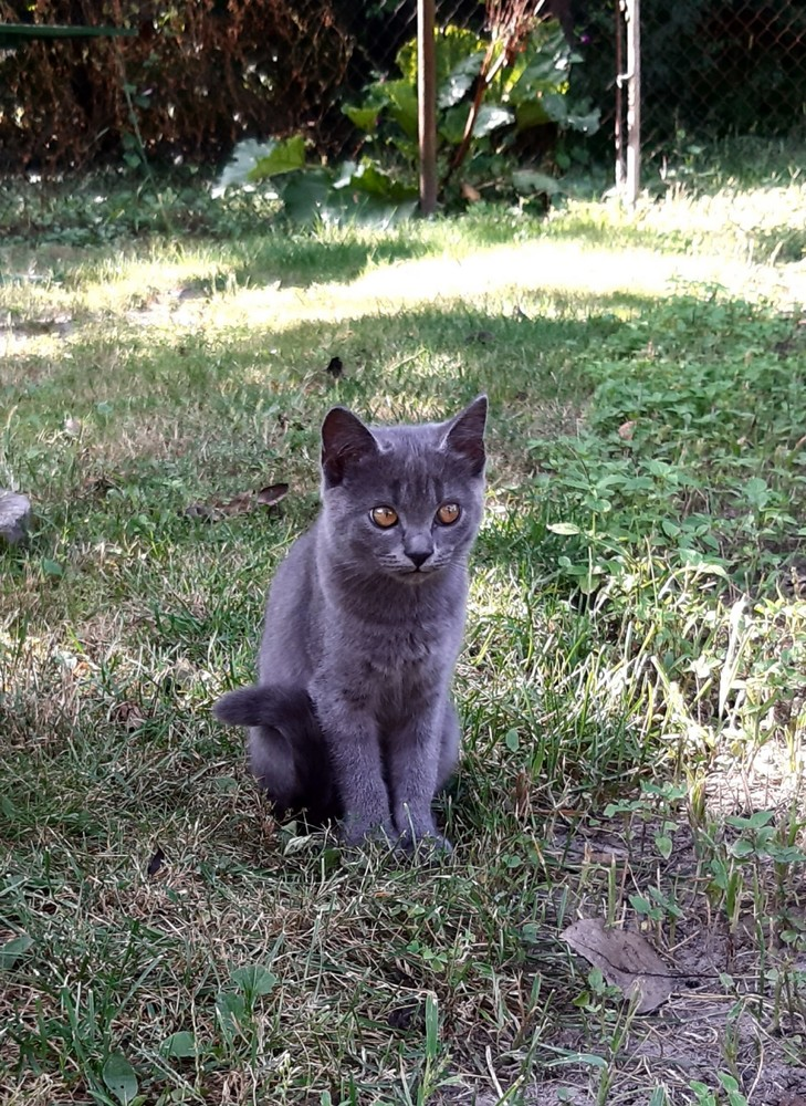 Подарую кішечку фото №1